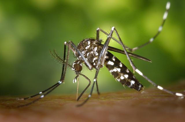 רשת גלילה נגד יתושים: השיטה הטובה ביותר להיפטר מיתושים בשנת ...