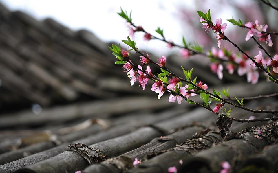 סוגי גגות רעפים - יתרונות וחסרונות