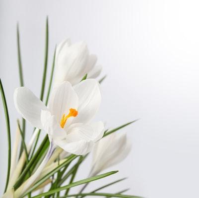 הזמנת זר פרחים לאירוע מיוחד