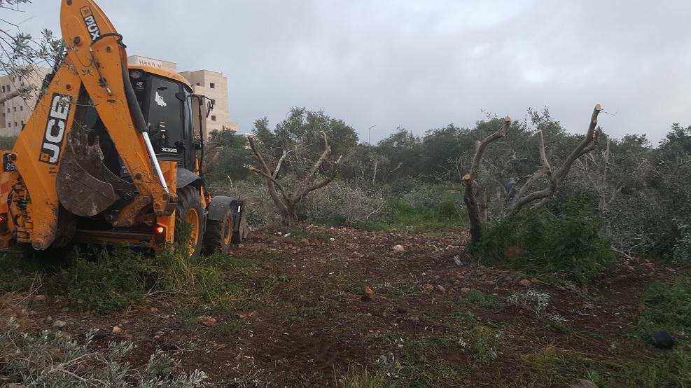 חריש: מפקחי רשות מקרקעי ישראל פינו מטע זיתים לקראת עבודות הת...