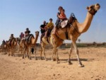 camels_trip_small